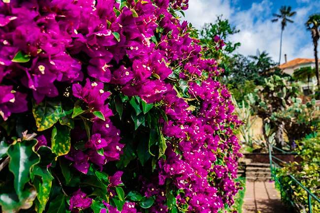 Incredible Botanic Garden of Funchal