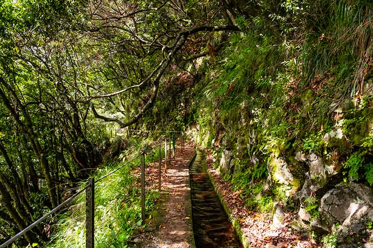 Things don't always go as planned - Levada do Rio, Madeira