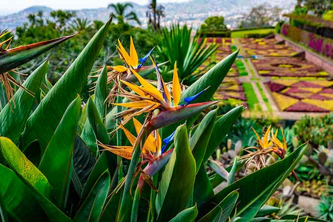 Amazing Things to do in Funchal, Madeira - Madeira Botanical Garden